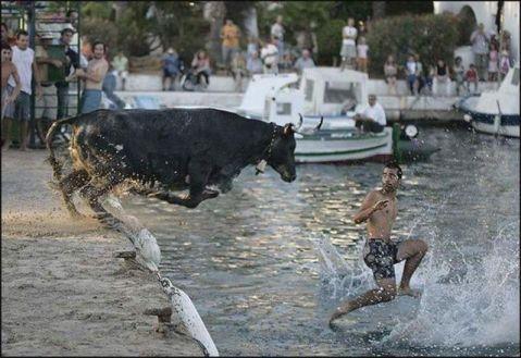 bull on the run