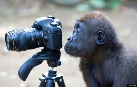 Camera Monkey